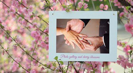 Kiraz Çiçeği Video Galerisi